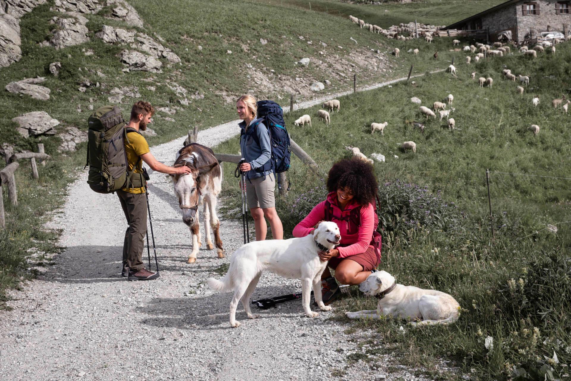 Hüttentouren planen und vorbereiten - Hunde und Essel begrüssen die Wanderer kurz vor der Hütte.