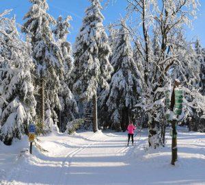 Die besten Langlaufstrecken im Bayerischen Wald. Foto: Mario Liebherr, pixabay.