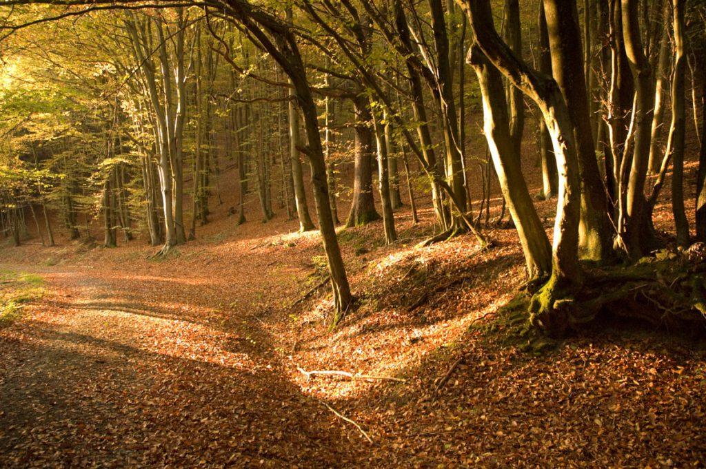 Autumn forest trail on the Natursteig Sieg.