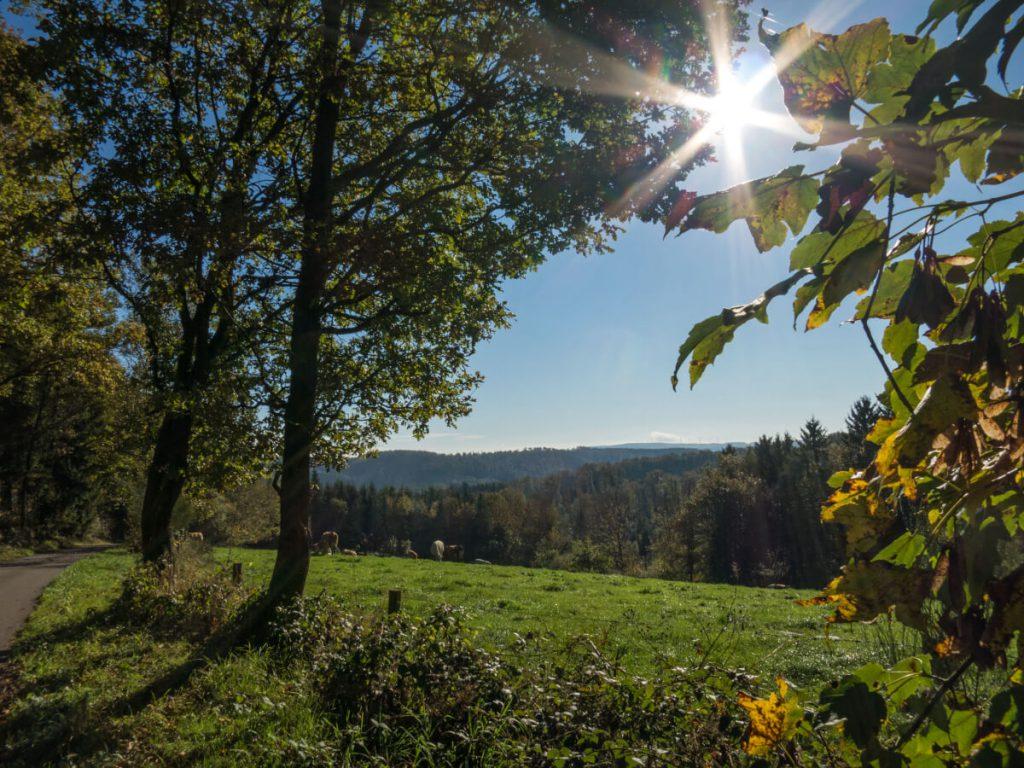 Sunbeams while hiking on the Natursteig Sieg.