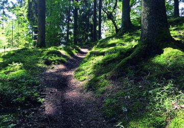 Hiking Natursteig Sieg - Path through the forest. Photo: Naturregion Sieg