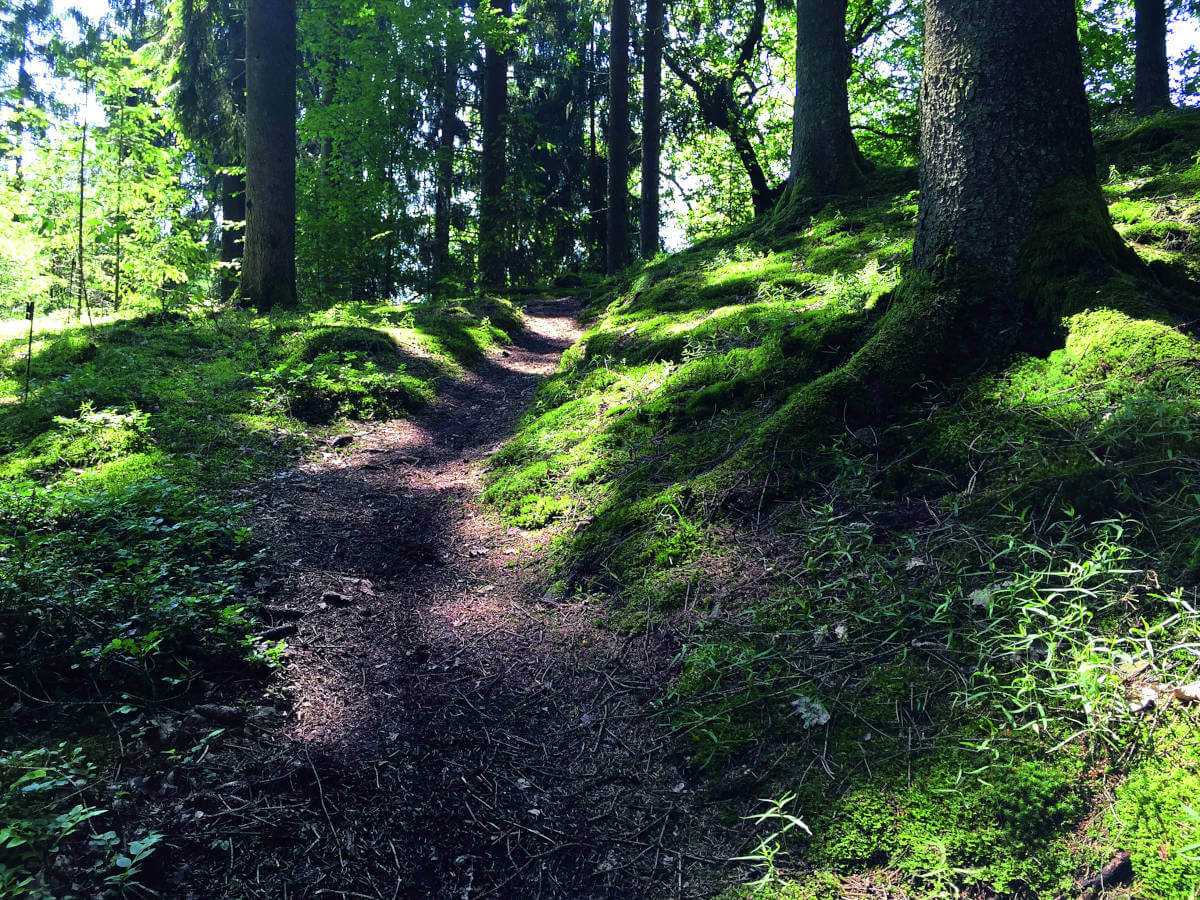 Hiking Natursteig Sieg - Path through the forest. Photo: Naturregion Sieg