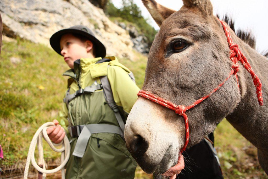Das Wandern mit einem Esel ist für Kinder ein echtes Erlebnis.