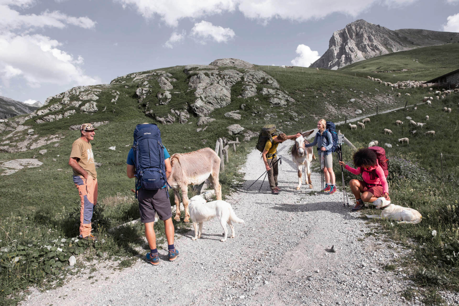 Wanderer streicheln kurz vor einer Hütte zwei Esel und zwei weiße Hunde.