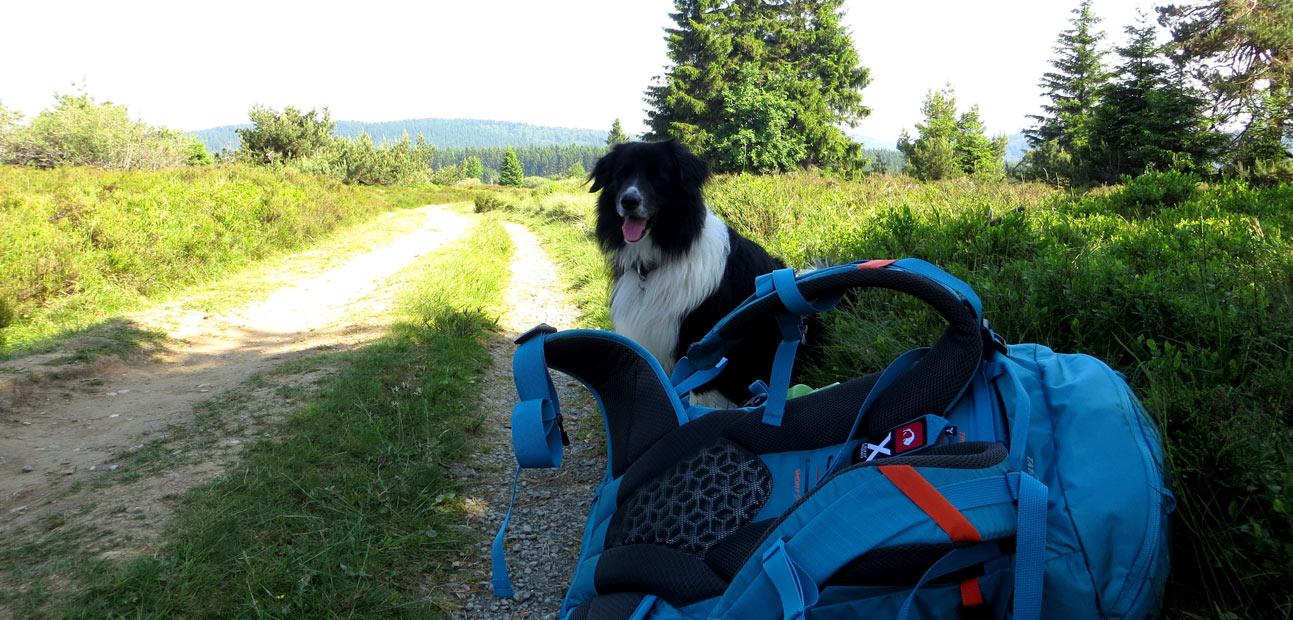 Hund und Rucksack am Wegesrand des Rothaarsteigs.