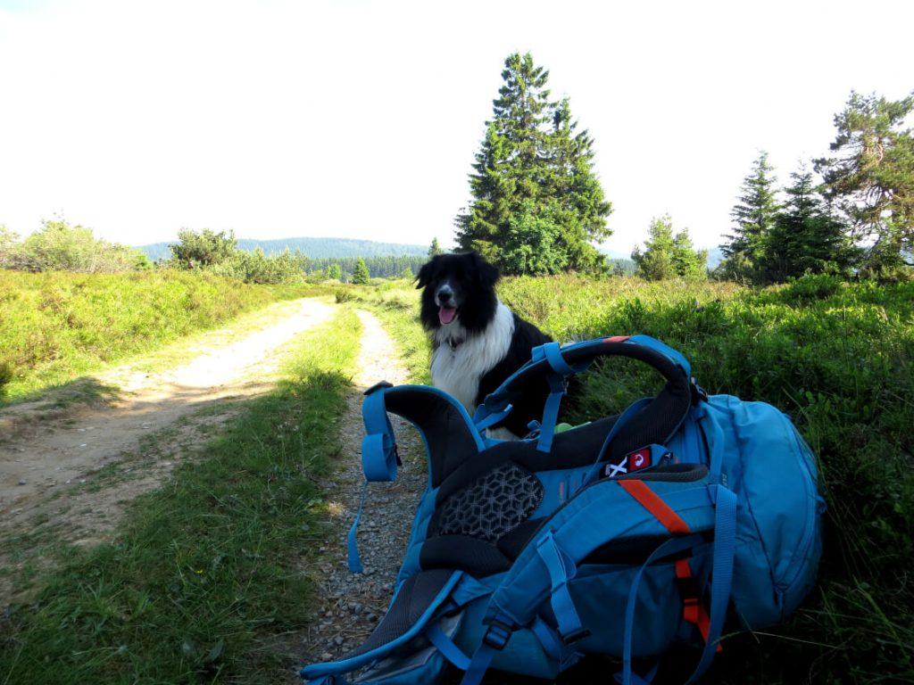 Hund und Tatonka Rucksack am Wegesrand.