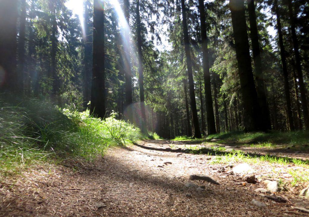 Waldweg auf dem Rothaarsteig.