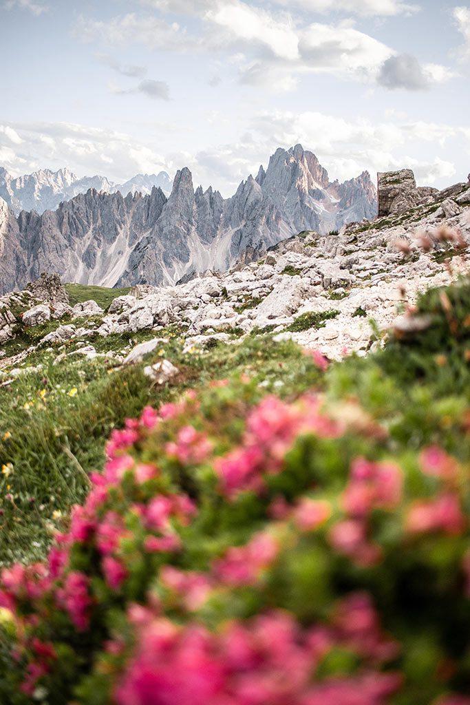 Blühende Blumen und Gebirgslandschaft in den Dolomiten nahe der Drei Zinnen.