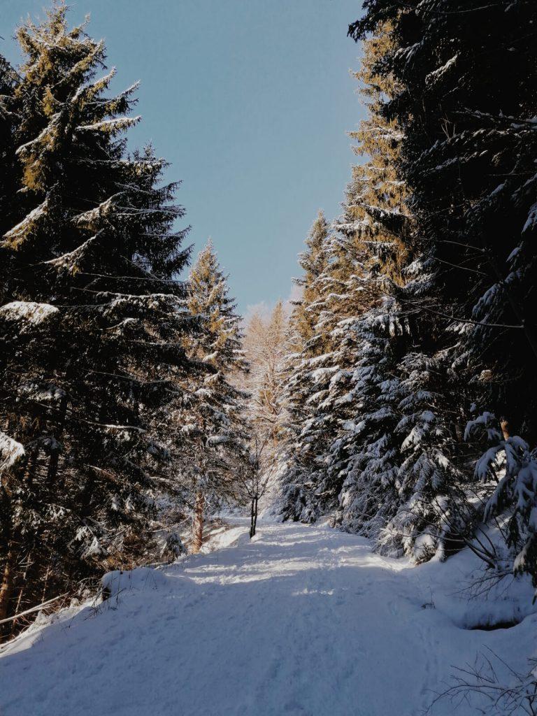 Die Wanderung zur Aueralm führt erst durch den Wald.