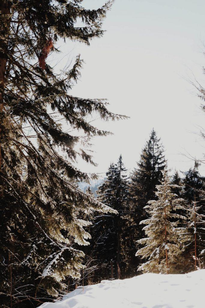 Wanderung zur Aueralm - Sonnenstrahlen scheinen durch die Bäume.